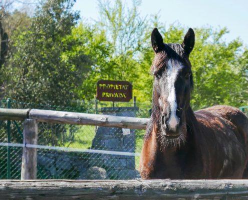 Cavalls, pastura, instal·lacions