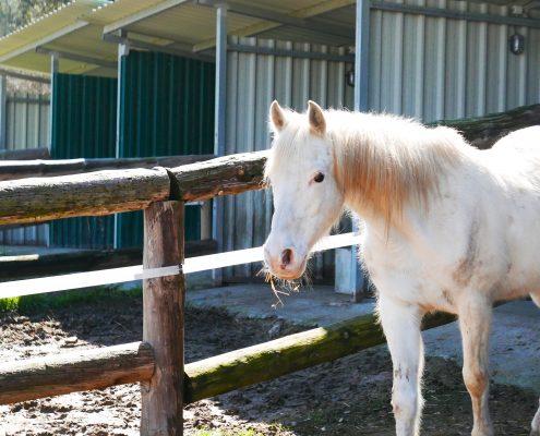 Paddocks, cavalls, cuidar