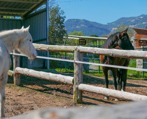 Cavalls, pupilatge, espai, reservar, cuidar